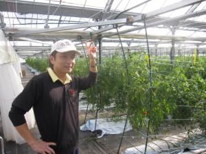 フィルム栽培のトマトと宮崎さん